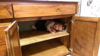 Rosie in cabinet
